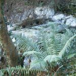 photograph: Isle of Man: Balaglas glen ferns