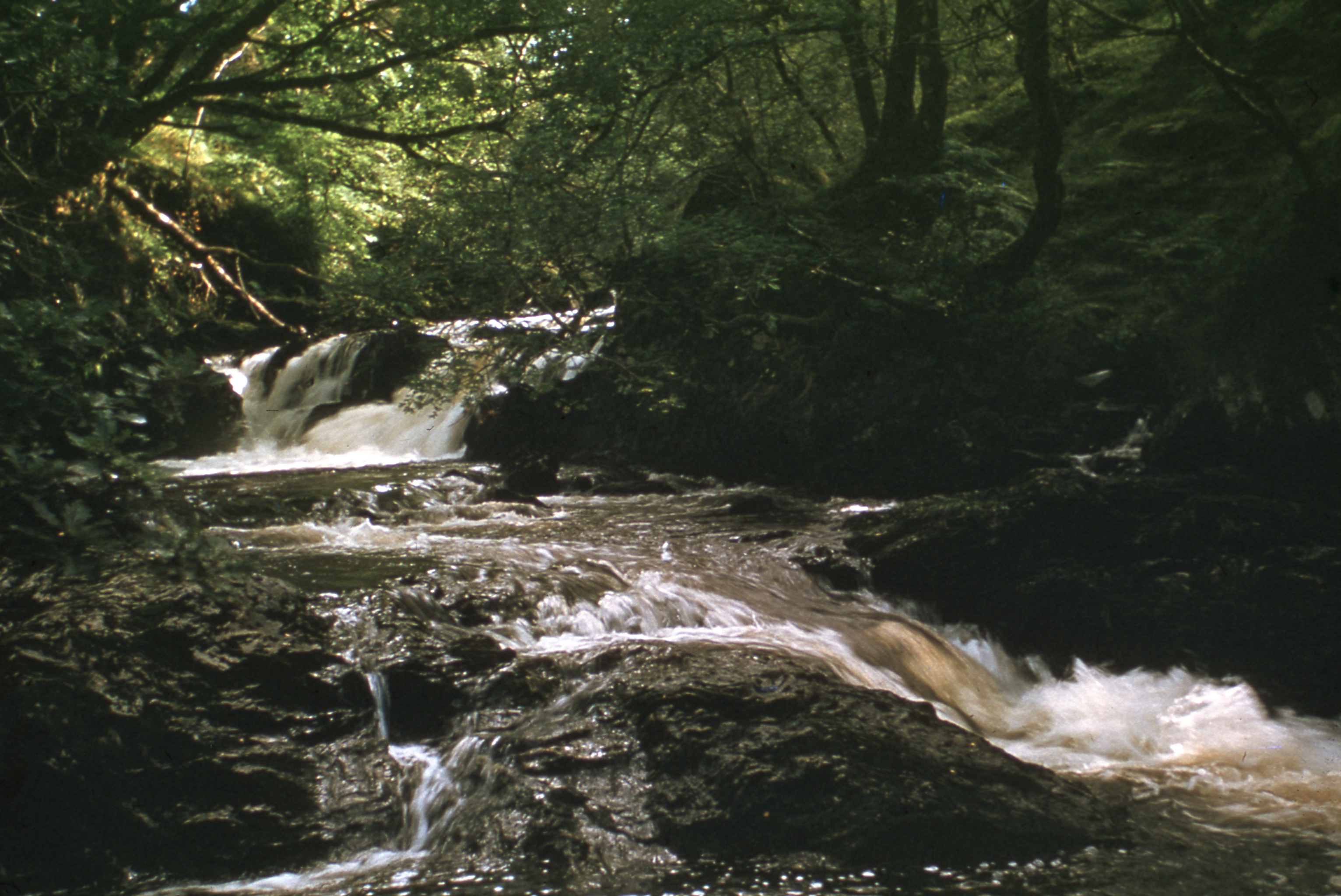 photograph of Inversnaid Falls upstream, with Ash & Fern